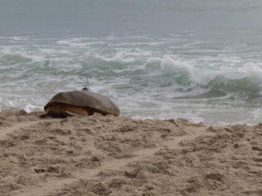 Tour de Turtles Event