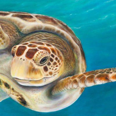 Sea Turtle Paintings