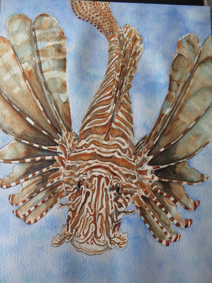 Lion Fish-Big Trouble In A Beautiful Package