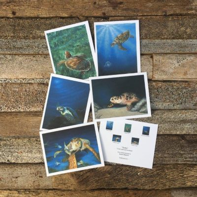 Sea Turtle Note Cards-Pack I