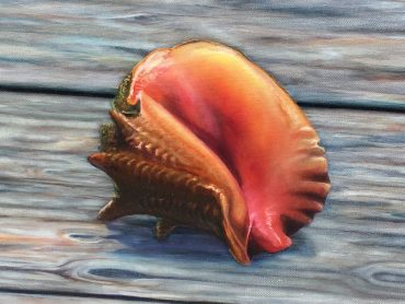 Conch Facts—The Sad Story Of The Disappearing Conch