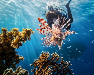 THE LIONFISH APOCALYPSE